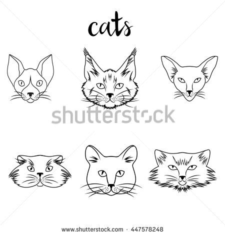 Collection of different breeds cats. Modern illustration of veterinarian clinic, logo.