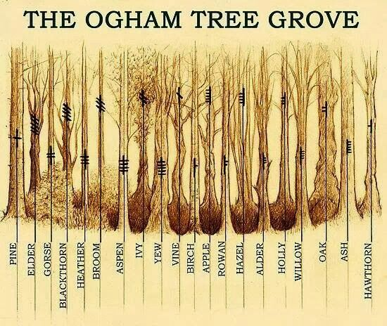 Druids Trees:  The Ogham Tree Grove.