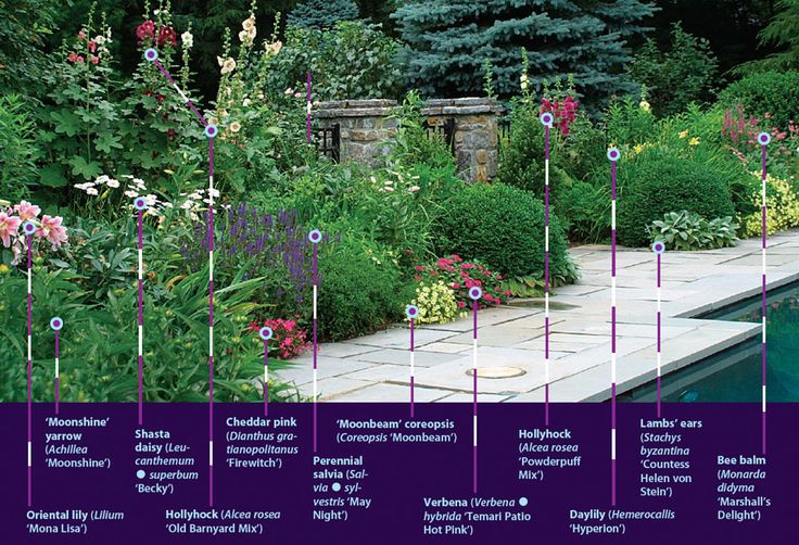 2359 best landscaping ideas images on pinterest for Low maintenance perennials zone 4