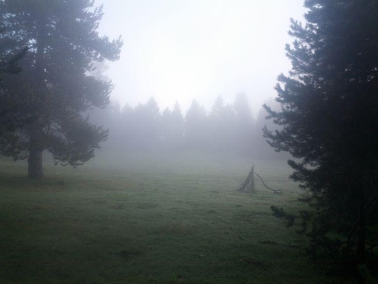 """La niebla le da el """"toque de misterio"""", a la recogida de setas..."""
