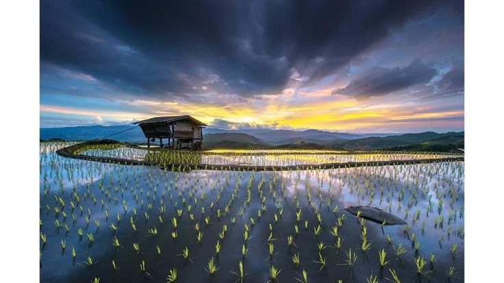 """Step of rice terrace at Chiangmai, Thailand."": Rice terrace at Chiangmai, Thailand. before rain. (Submitted by Sarawut Intarob)"