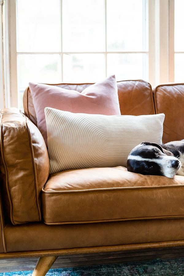 5 Tips For Choosing Pet Friendly Furniture Pet Friendly