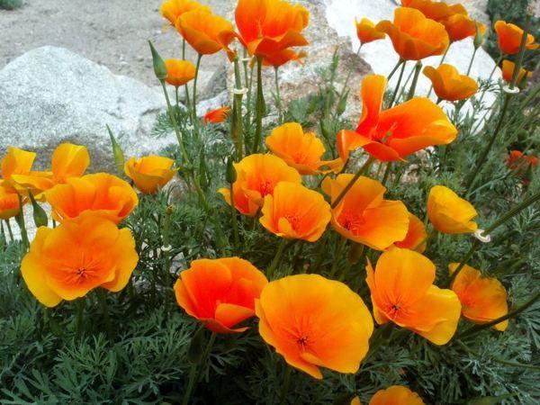 flowers in el paso