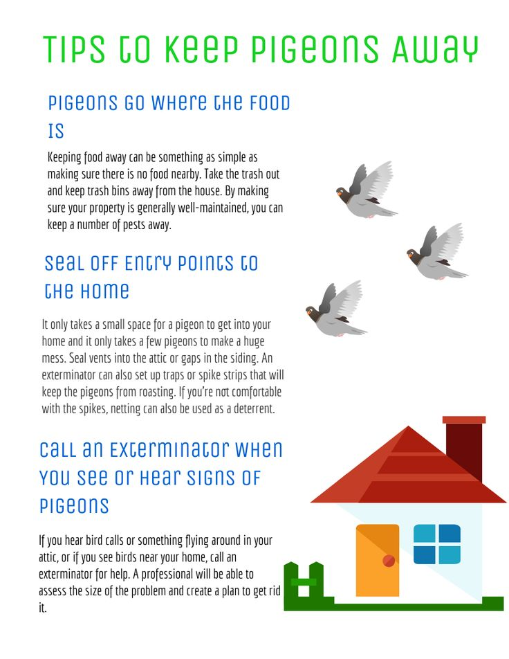 Tips to keep pigeons away infographic tips pigeon