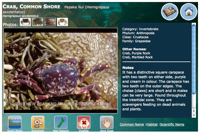 NZ Marine Life Database can be found on the NZ Marine Studies Centre web site. Photos, classification, information on ecology and habitat can be found.