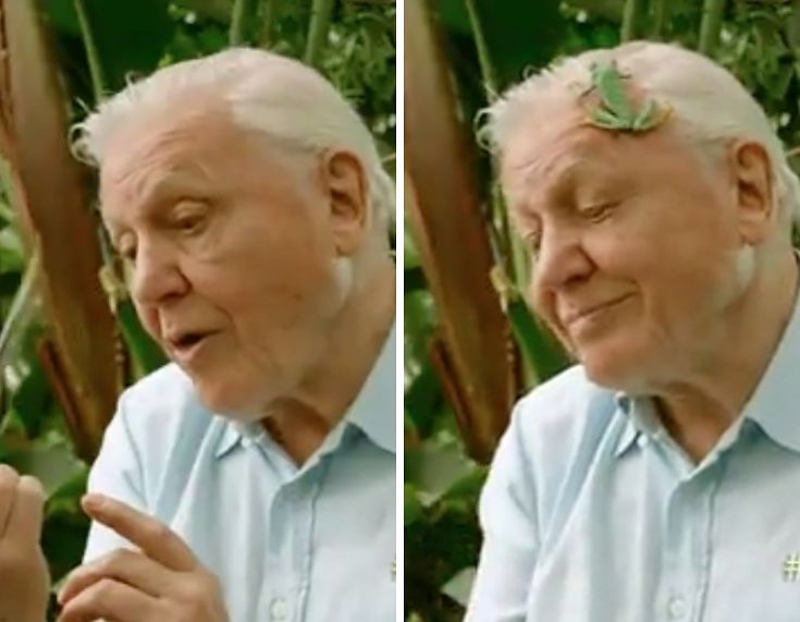 21%20Reasons%20Why%20David%20Attenborough%20Is%20Our%20Most%20Precious%20National%20Treasure
