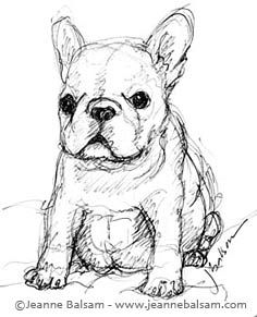 French Bulldog Sketches III