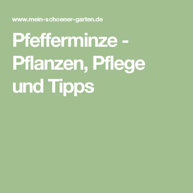17 Best Ideas About Pfefferminze Pflanzen On Pinterest | Waldrand ... Positive Wirkung Lavendel Pflege