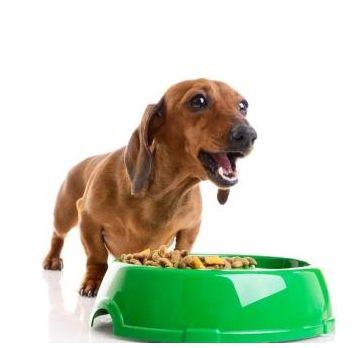 Pet Phos Grand Chien 100 Comprimate - petsmag.ro