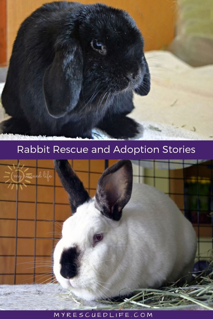 Rabbits Are Now The Third Most Popular Pet In America But Despite Their Growing Popularity There S Still To Animal Shelter Quotes Homeless Pets Pet Care Dogs