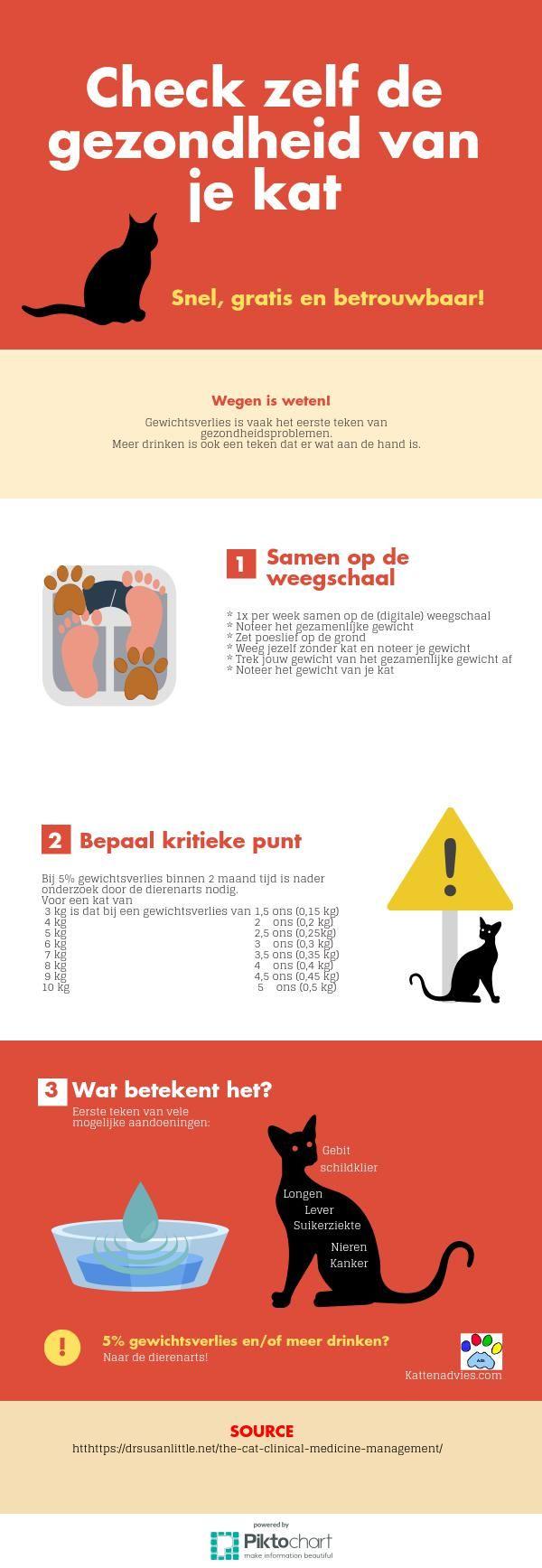 Check zelf de gezondheid van je kat | @Piktochart Infographic