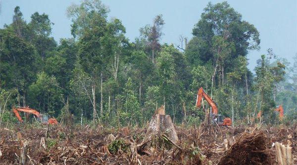 Eyes on the Forest: Penyuplai Asia Pulp and Paper Kembali Tebangi Hutan Alam di Riau | Mongabay.co.id http://www.mongabay.co.id/2013/05/16/eyes-on-the-forest-penyuplai-asia-pulp-and-paper-kembali-tebangi-hutan-alam-di-riau/