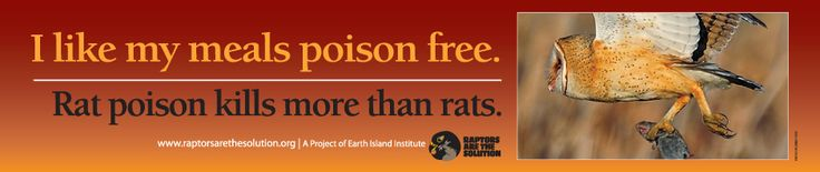 RAPTORS ARE THE SOLUTION | Working to Save Wildlife From Rodenticides.