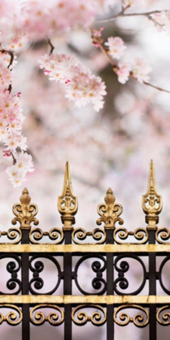 Un jolie parc  PARIS Parc monceau le printemps en rose!
