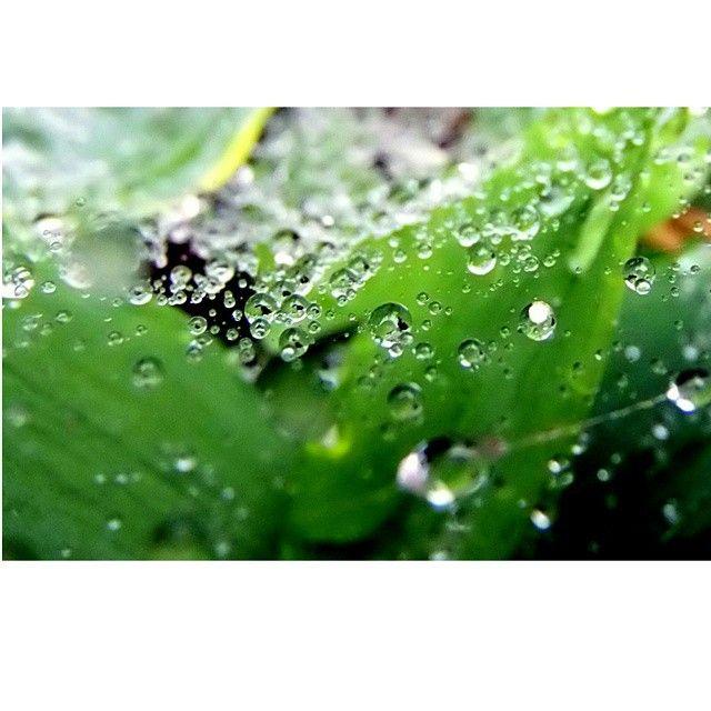 #nature #naturelovers #kropladeszczu #water#macro#macrophotography #photoshoot #instaphoto #instanature #fun#lubiepolske