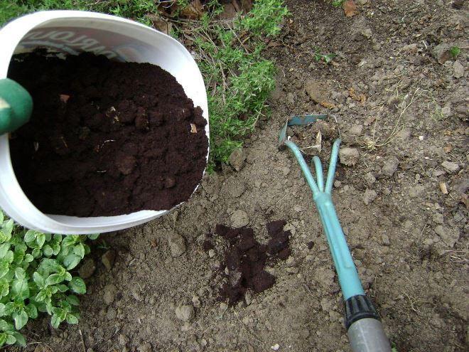 84 Best Garden Images On Pinterest Herbs Garden Orchards And Vegetable Garden