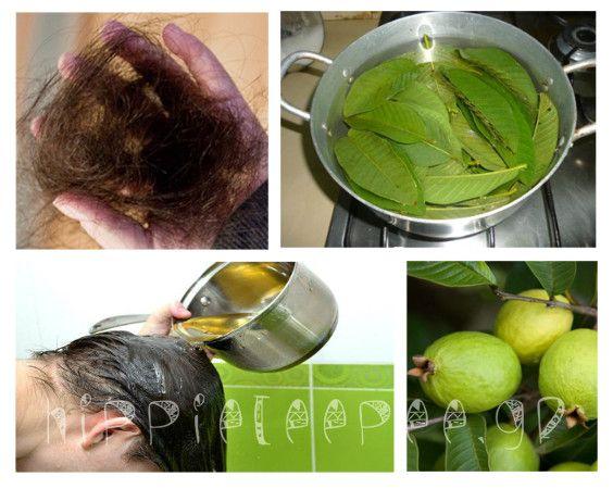 Τα φύλλα γκουάβα είναι εξαιρετικά επωφελή, καθώς παρέχουν ένα ευρύ φάσμα από οφέλη για την υγεία.  Είναι υψηλά σε υγιείς φυτικές ίνες, βιταμίνη C, βιταμίνη Α, και κάλιο.     Οι ειδικοί λένε ότι μπορούν να αποτρέψουν αλλά