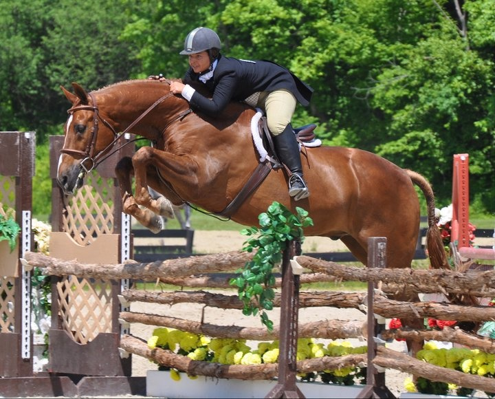 17 Best images about Horses 9 on Pinterest | Equestrian ...