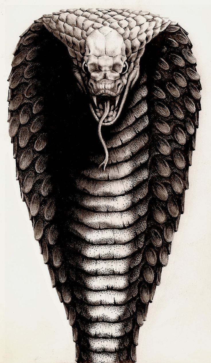 Розы, крутые картинки кобра