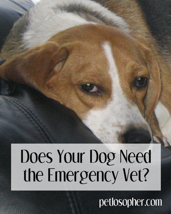 Does Your Dog Need the Emergency Vet?