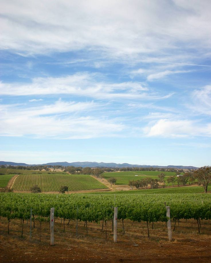 Angullong   Angullong vineyard near Orange, NSW,  Australia.   #angullong #vineyard #orange #nsw #australia #wine #vines #sky #patterns #landscape #winetasting #frasermccullochphotography #whitewine #redwine #agriculture #land