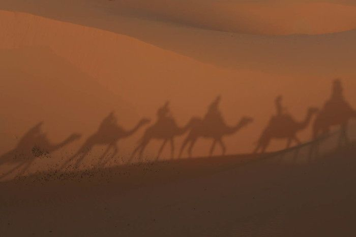 Shadow of the camels on our Sahara Adventure
