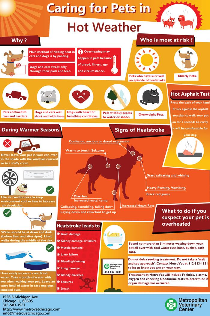 Hot Weather Tips For Your Pet - An Infographic from Chicago Veterinary Hospital & Emergency Vet - Metropolitan Veterinary Center