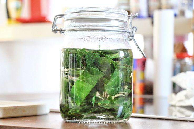 Χρησιμοποιώντας δηλητηριώδης κισσός ως απορρυπαντικά