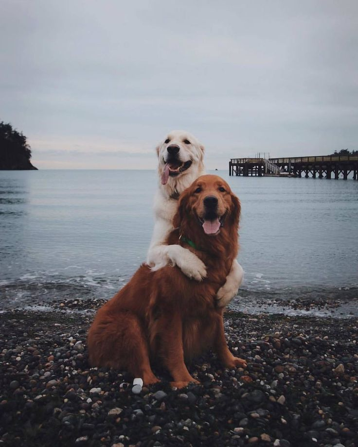 Hunde Liebe Schone Hunde Ausgestopftes Tier Susseste Haustiere