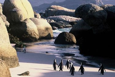 Boulder's Beach, The Cape, South Africa
