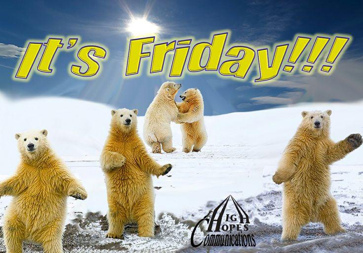 It's Friday Bears 2 www.highopescommunications.ca