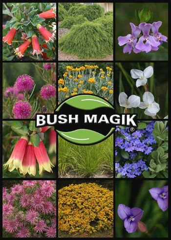 Australian Native Plants Wholesale Nursery : Bushland Flora