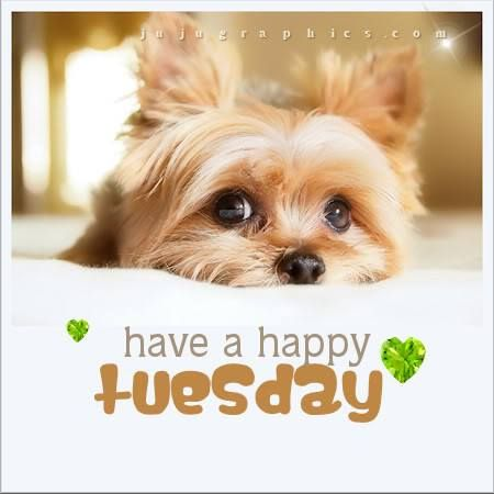 I hope you all have a Happy Tuesday :)