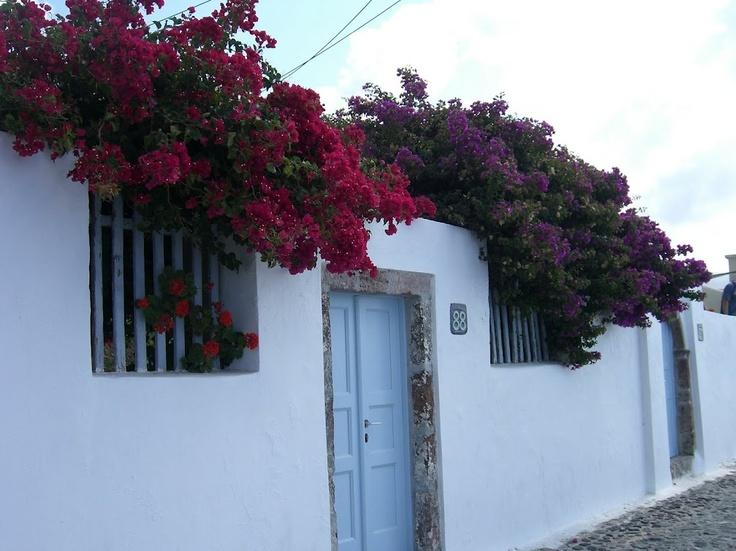 Flowers on Santorini