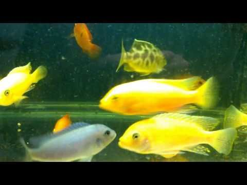 25 best ideas about comet goldfish on pinterest for Cute names for fish