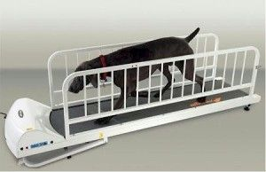 Dog Supplies Petrun Pr725 Dog Treadmill Click http://www.amazon.com/gp/product/B006GR9IO0/ref=as_li_ss_tl?ie=UTF8&camp=1789&creative=390957&creativeASIN=B006GR9IO0&linkCode=as2&tag=petproonl-20 To BUY! The PetRun PR725 Dog Treadmill by GoPet is a professional quality dog treadmill for your active dogs. This treadmill is designed for large dogs such as Labs and Shepherds;that need a larger running surface. from $1,250.65