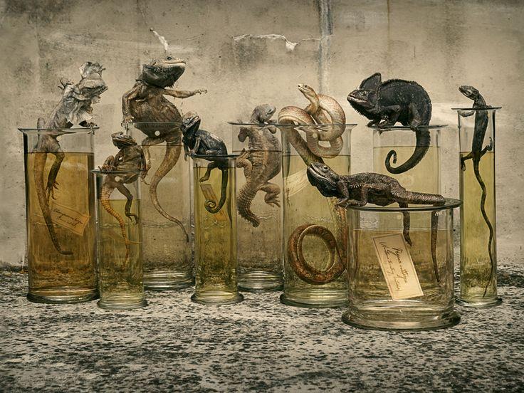 Natural Selection 26 Nov–18 Dec 2014 at Shapero Modern Gallery, #London