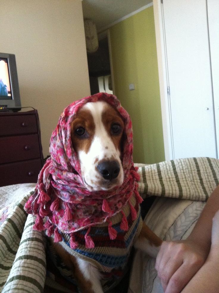 beduina-Florencia cocker