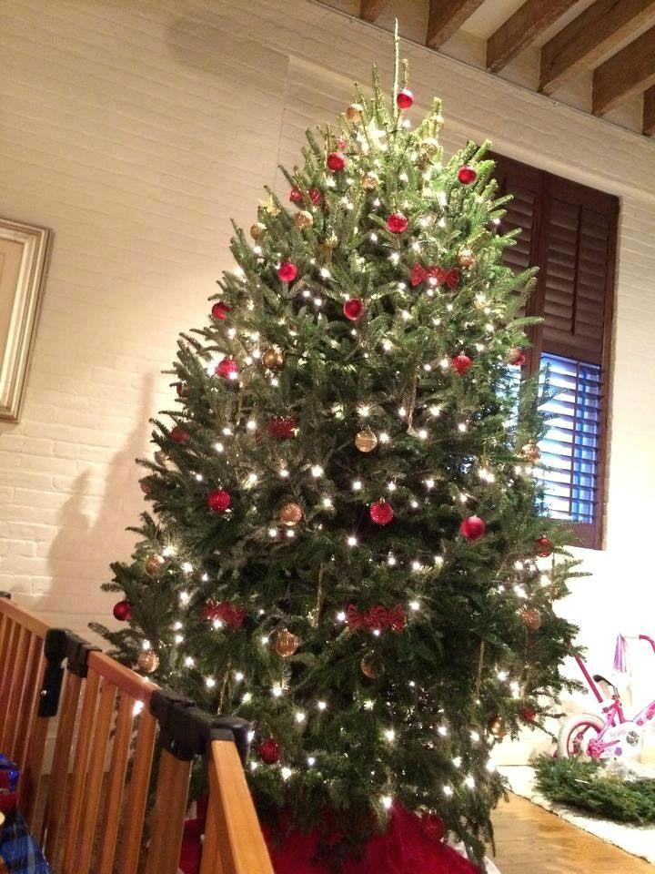 Christmas Tree Decoration Trees Decorations Crossword Clue In 2020 Amazing Christmas Trees Christmas Tree Pictures Christmas Tree