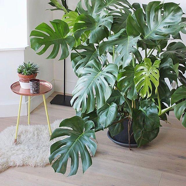【saltroom_】さんのInstagramをピンしています。 《色々な植物プランター販売しております _______ i n f o m a t i o n  商品のお問い合わせ、ご購入は、  オンラインストアにて承っております。 ↓ saltroom.shop-pro.jp . . . #simplicity#minimalist#minimalism#mnml#cactus#planter#instacactus#minimalistic#雑貨#テラリウム#シンプルな暮らし#ドライフラワー#多肉植物#花瓶#フラワーベース#ミニマル#プランター#植物のある暮らし#お洒落さんと繋がりたい#暮らし#水耕栽培#日々#日常#シンプルライフ#日々のこと#暮らし#花のある暮らし#グリーン#サボテン》