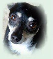 puppy-ogen