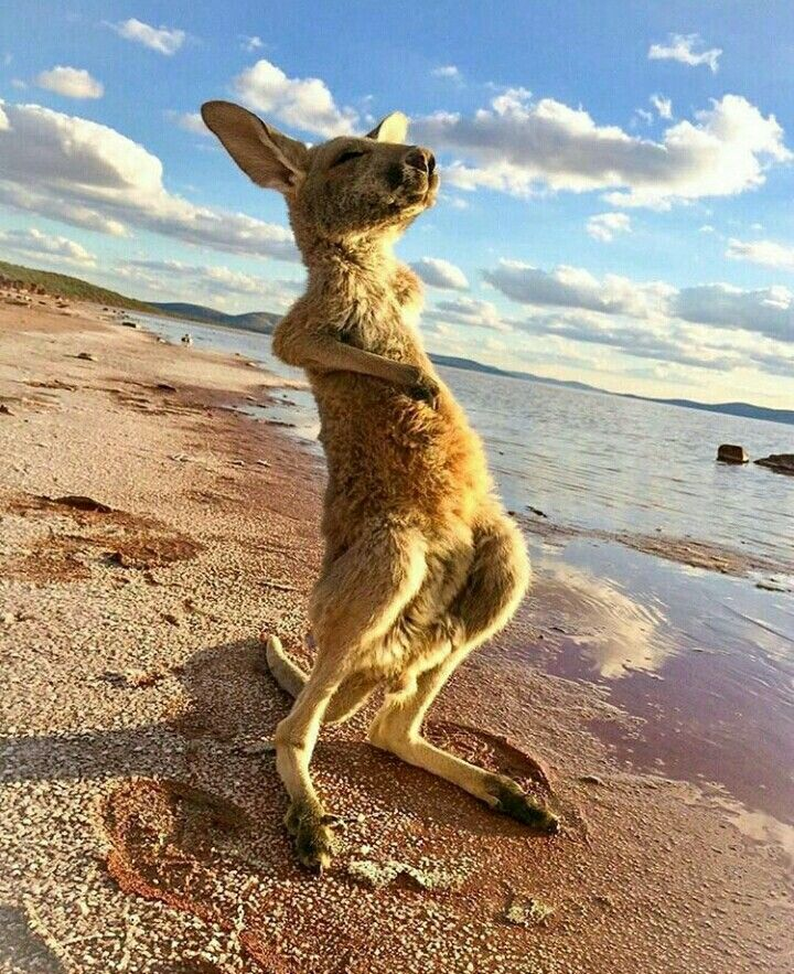 Your coolest moment of zen by a kangaroo possibly ever.