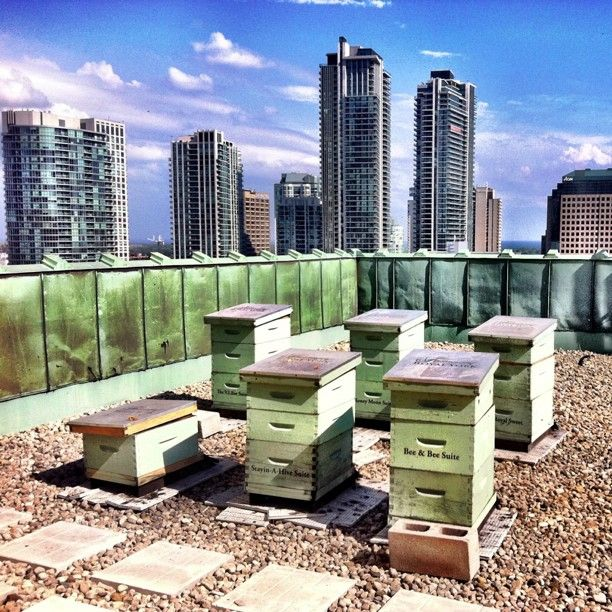 17 Best Images About Roof Top Bee Hives On Pinterest