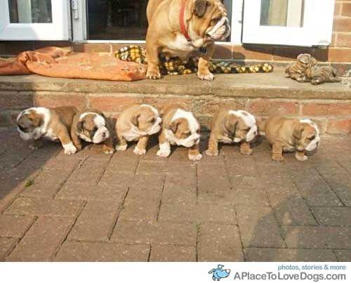 Bulldogs Take Your Mark
