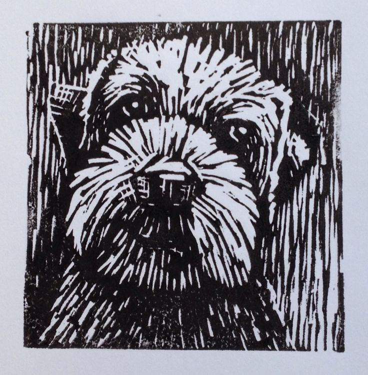 Linocut of 'Gimli' the border terrier. #printoctober Paul Smith