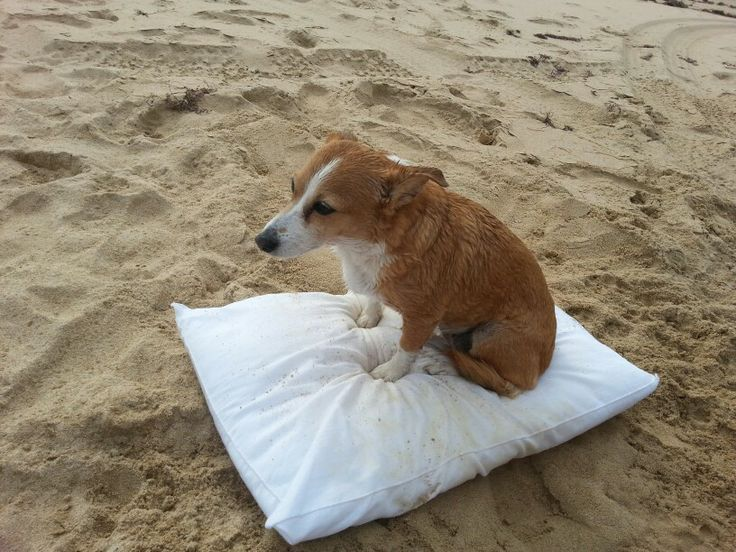 No one likes to get sand in their butt after a swim