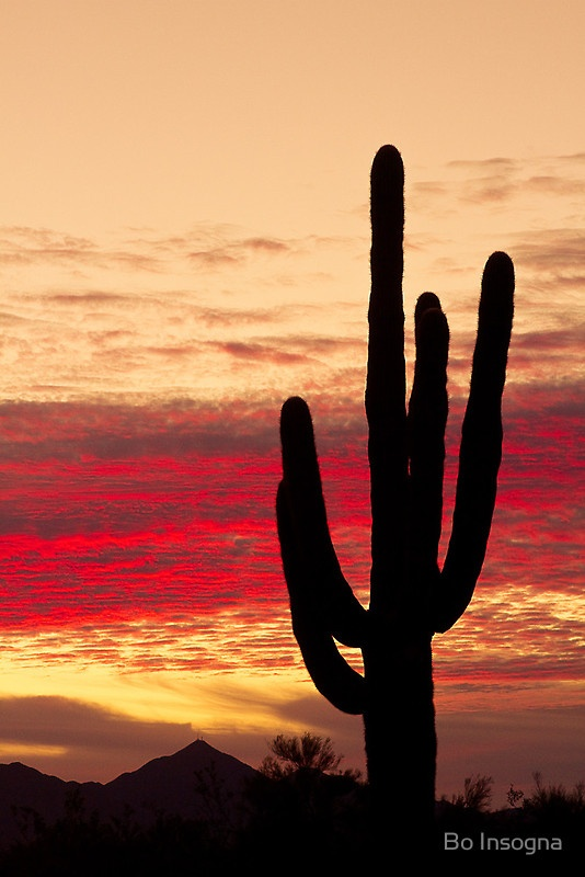 Sunrise in the Arizona Sonoran Desert with giant saguaro cactus and red burning sky