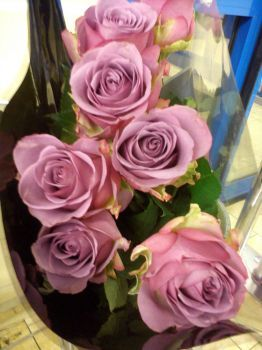 lila je nádherná barva (80 pieces)