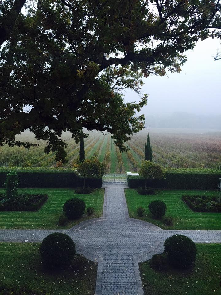 Morning mist over the vineyards .. #Franschhoek #Wine
