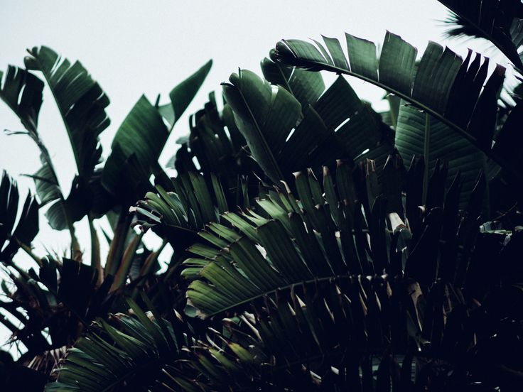 It's a jungle out there. #bondi #plant #green #lifestyle